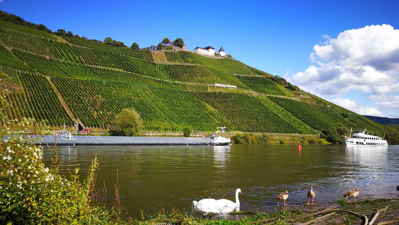 德国葡萄酒在中国